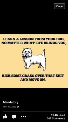 Lesson From Dog