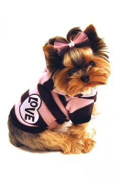 Yorkshire Terrier Puppy Dogs Yorkie Puppy Dog Clothing / Dogs In Clothes puppy in stripes is a yes! Cute Puppies, Cute Dogs, Dogs And Puppies, Yorkshire Terriers, Yorkies, Top Dog Breeds, Pet Breeds, Most Popular Dog Breeds, Yorkie Puppy
