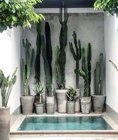 For cactus lovers everywhere via 🌵 📷 / design at . Succulents Garden, Succulent Planters, Concrete Planters, Flowers Garden, Hanging Planters, Plant Decor, Cactus Plants, Cactus Art, Cactus Flower