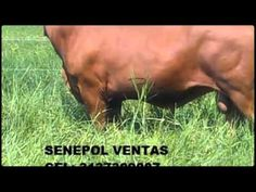 crédito finagro forrajeras para bovinos