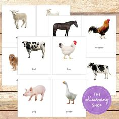 Montessori Farm Animal 3 Part Cards Animal Pictures For Kids, Farm Unit, Title Card, Picture Cards, Card Patterns, Animal Cards, Farm Animals, Mammals, Safari