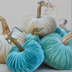 velvet pumpkins in aqua shades