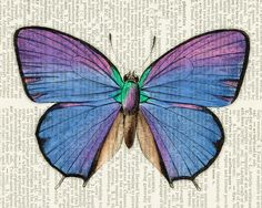 butterfly - vintage blue butterfly printed on old dictionary page.