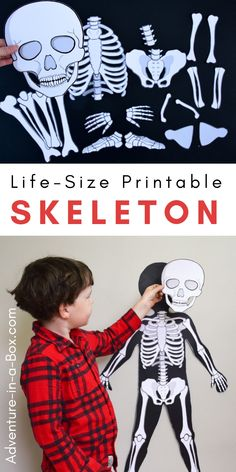 Make a life-size paper skeleton for kids to study anatomy the hands-on way with life-size printable organs! #homeschool #stemactivities #stemeducation #homeschooling