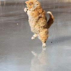 - Dancing on Ice ? - It counts!