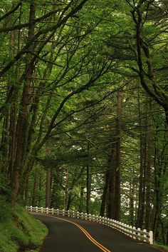 Natural canopy over the Columbia Gorge Scenic Highway in Oregon • photo: Frank Kovalchek on Flickr