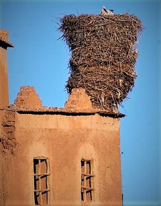 White Stork Nest on top of a House in Morocco.