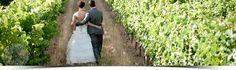 Robertson Valley Wine Farm Wedding and Function Venue on banks of Breede River with Farm Accommodation Farm Wedding, Dream Wedding, Tent Reception, Wedding Function, Cellar, Wines, Wedding Venues, How To Memorize Things, Warm