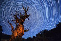 Bristlecone Star Trails by Jody MacDonald on 500px