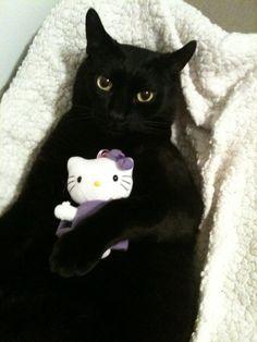 Well Hello Kitty - oh look @Joanna Szewczyk Gierak Colin