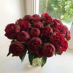 Ну вот как вам передать всю их красоту через экран!?))) мы восхищаемся...каждый раз❤️ #mono_flowerslovers