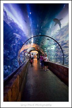 Shark Reef Aquarium at Mandalay Bay Hotel, Las Vegas, NV