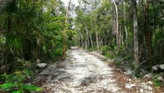 Real Estate Tulum Lot Residencial