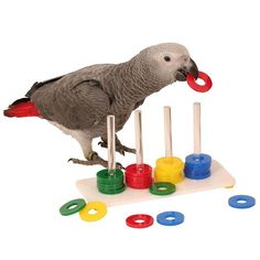 Ring Stacker - Medium Parrot Toy