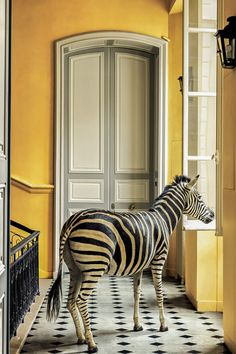 Ein Zebra im Treppenhaus