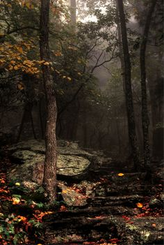 tulipnight:  Fall byMaria Jaeger