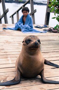 Ecuador - Isla Isabela, Galapagos... By Roberto Scriboni