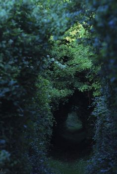 green power – Greenest Way Dark Green Aesthetic, Nature Aesthetic, Alice In Wonderland Aesthetic, Slytherin Aesthetic, Belle Photo, Mother Nature, Beautiful Places, Mystery, Scenery