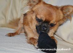 Harybo est focalisé sur son nouveau jouet, des chaussettes !