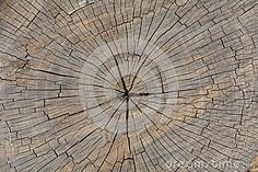 Texture of an old cut tree trunk with vertical bark patterns and white spots.