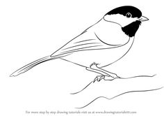 Learn How to Draw a Black-Capped Chickadee (Birds) Step by Step : Drawing Tutorials