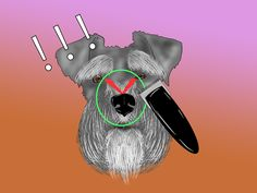 Really good video on the first tab. How to Groom a Miniature Schnauzer