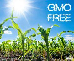 Organic food is GMO-free. #organicfarming #HealthyFood #sustainabledevelopment
