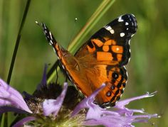 Mild fall days keep butterflies flying in Boulder County
