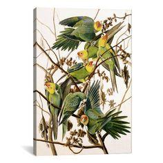 iCanvas 'Carolina Parakeet, From Birds of America, 1829' by John James Audubon Painting Print on Canvas