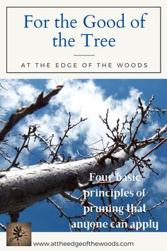 Four basic principles of pruning that anyone can apply Permaculture, How To Apply, Good Things, How To Plan, Learning, Blog, Studying, Blogging, Teaching