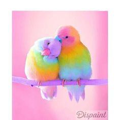 The colorful birds Cute Birds, Pretty Birds, Beautiful Birds, Animals Beautiful, Cute Funny Animals, Cute Baby Animals, Animals And Pets, Animal Pictures, Cute Pictures