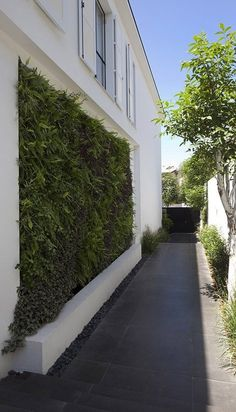 Vertical wall garden. House in Ramat Hasharon by Levy:Chamizer...