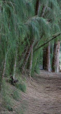 Hau'ula Forest Reserve, Oahu