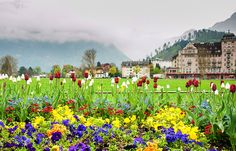Tourist Places in the world, Attractive tourist place in The World.: Top 10 Tourist Attractions in Interlaken