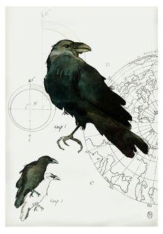 Art print 29x42 cm, signed. Anna Handell, Illustration, ink, art, bird, Nordic design, Scandinavian design.