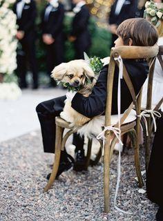 A ring bearer and the flower pup: http://www.stylemepretty.com/2016/02/04/black-tie-secret-garden-wedding/ | Photography: Jose Villa - http://josevilla.com/