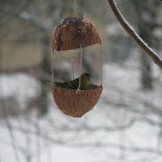 Přírodní krmítko pro ptáky Přírodní krmítko vyrobené z kokosového ořechu, z něhož bude určitě chutnat všem ptákům.