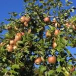 How to grow your own fruit at home