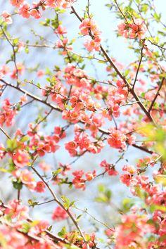 spring in central park -5556