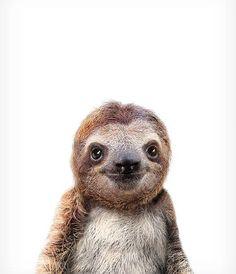 Baby sloth print Jungle animal prints The Crown Prints