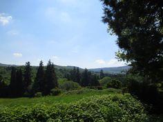 A blue sky day in Powerscourt Gardens, County Wicklow, Ireland! www.powerscourt.ie #wicklow #ireland #gardenidea #powerscourt #garden #enniskerry #dublin
