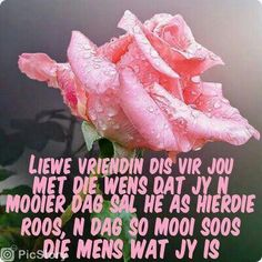 Liewe Vriendin Best Birthday Wishes Quotes, Birthday Quotes, Lekker Dag, Sleep Quotes, Afrikaanse Quotes, Goeie More, Happy Birthday Pictures, Morning Blessings, Wish Quotes