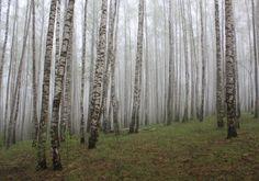 Svistkov Alexandr:n valokuva metsä keväällä. Kuvaklubi