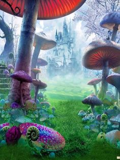 Kate Children Photography Backdrops,Children Forest Colorful Mushrooms Backdrops For Photographers,No Winkle Seamless Collapsible Photo Studio Props Background