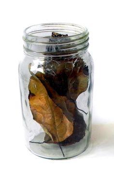 frasco hojas secas del jardin