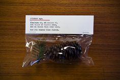 Plantera-din-egen-julgrans-kit