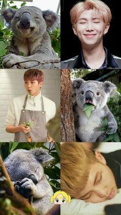 Que mono namjoon koala Namjoon, V Taehyung, Rapmon, Jhope Cute, Yoongi Bts, Bts Rap Monster, Bts Memes Hilarious, Bts Funny Videos, Foto Bts