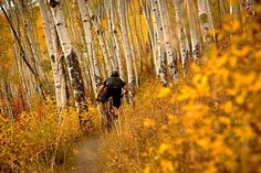 Riding amongst the golden colours