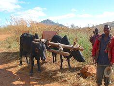 Malawi http://www.trailheadstudios.com