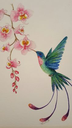 Amazing Orchid and Hummingbird, oil portray, by Andrea OSullivan CalicoCuts on Fac… - Vogel Hummingbird Drawing, Hummingbird Pictures, Watercolor Hummingbird, Watercolor Bird, Watercolor Paintings, Tattoo Watercolor, Bird Painting Acrylic, Aquarell Tattoos, Wal Art